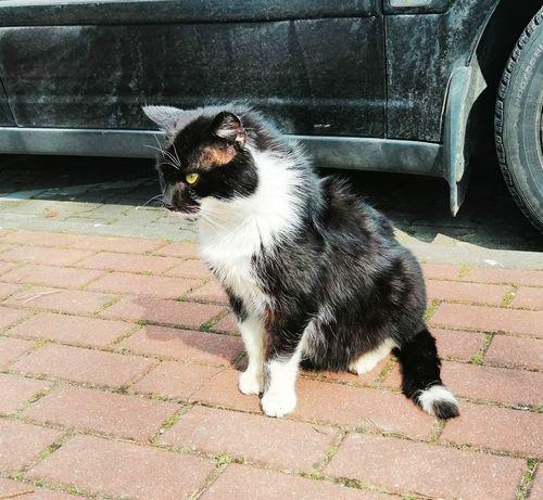Biało-czarny kotek szuka domu