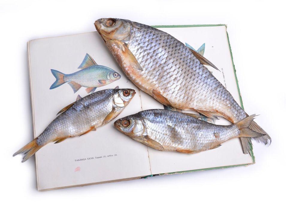 Рыба вяленая на любой вкус от 140 грн., вяленая икра Киев - изображение 1