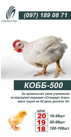 Бройлер КОББ 500 ОПТ и Розница
