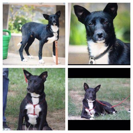 Пропала черно- белая собака Рита , район Макарова, Киевская область