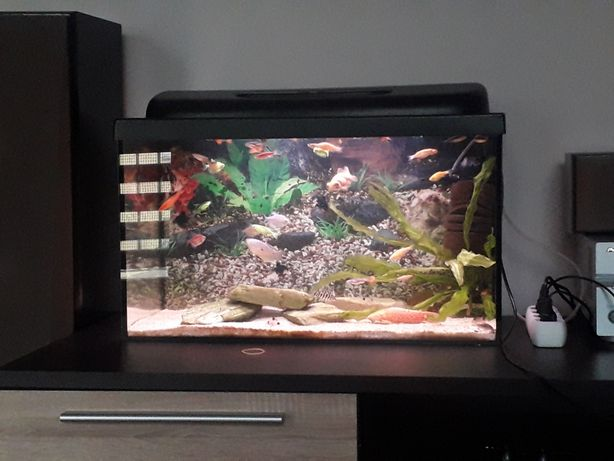 Akwarium 70l ryby led cale wyposazenie