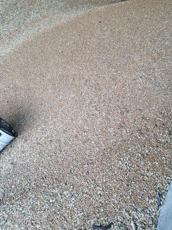 Продам пшеницу урожая 2021