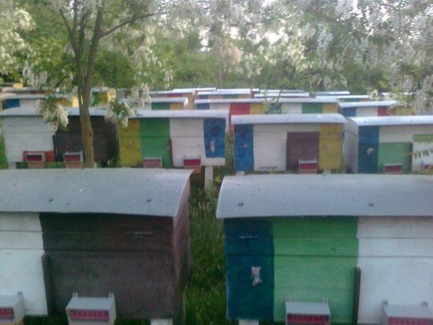 Бджолопакети, пчелопакеты, есть доставка
