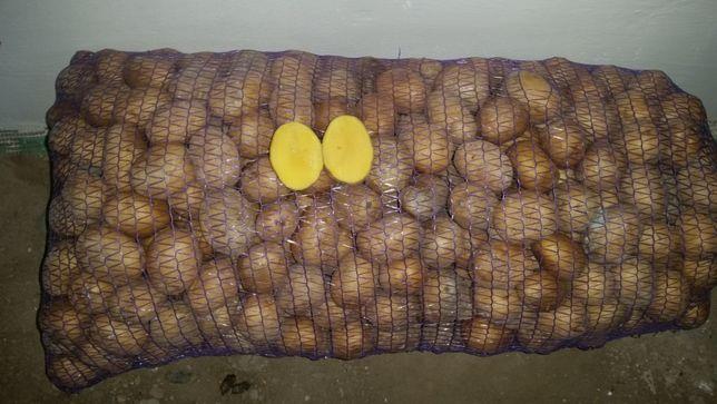 продам картошку сорт гала