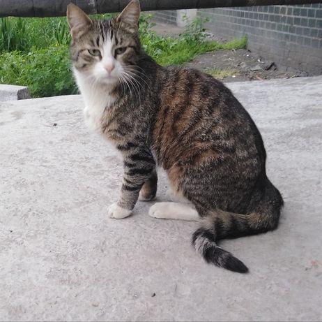 Красавица кошка ищет дом, кошечка в хорошие руки