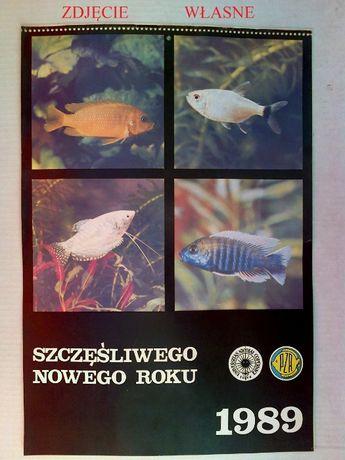Stary kalendarz, ryby akwariowe, akwarystyka - 1989
