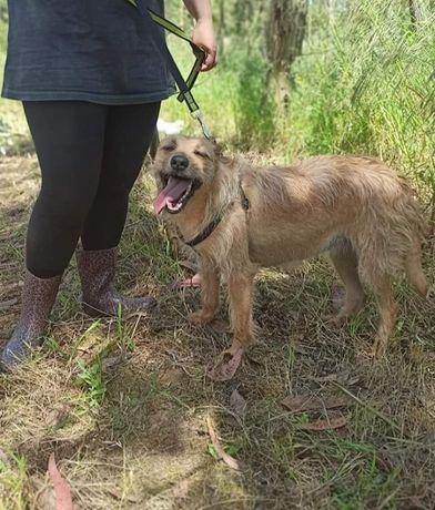 Francisca- Cachorra de porte médio para adoção