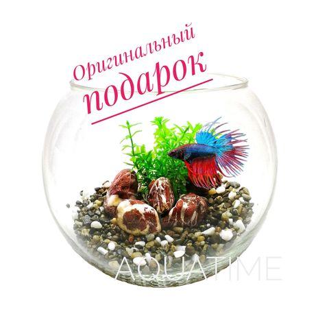 Оригинальный подарок Круглый аквариум с рыбкой Петушок| Аквариум |Киев
