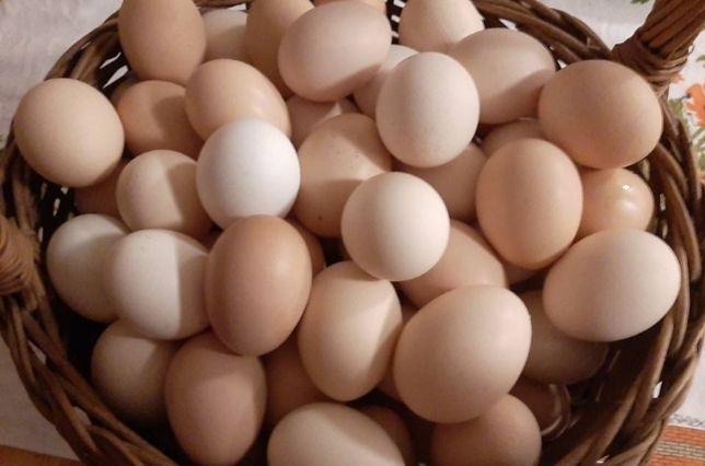 Jajka swojskie .