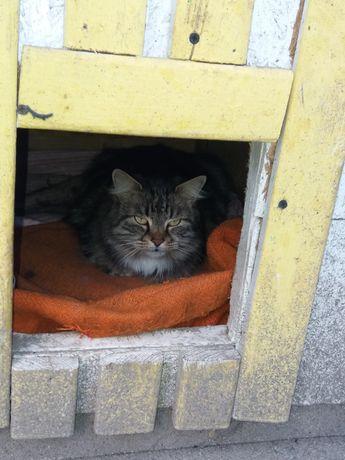 Пропала кошка. Район жилпоселка