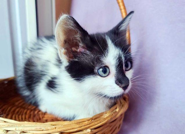 Маленькая кошечка Ума 2 месяца киса кошка котенок котик