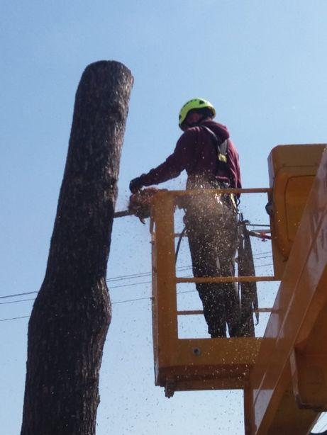 Przycinanie i wycinka drzew, podnośnik koszowy, alpinistyka