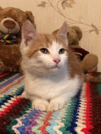 Мальчик котенок с мраморным окрасом