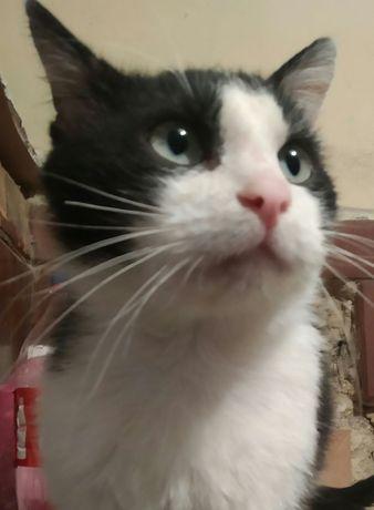 Кіт, півтора року. Кастрований.