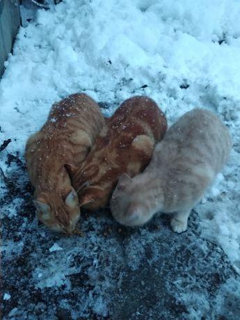 Помогите уличным котикам