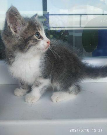 Отдам в заботливые руки котёнка около месяца,девочка.