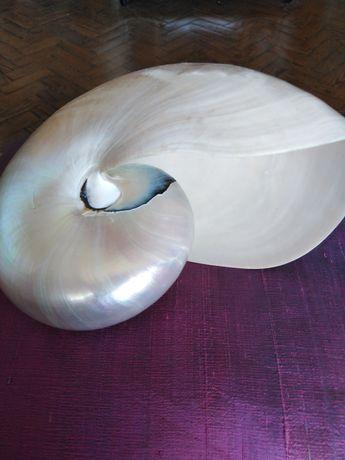 Concha Nautilus em madrepérolao, impecável.