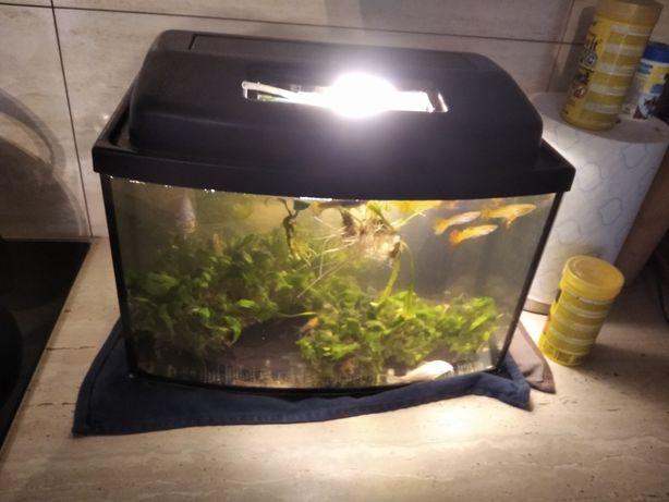 Sprzedam akwarium panoramiczne z wyposażeniem 25l
