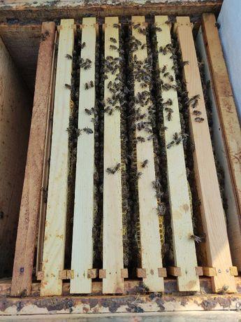 Продам бджоли сім'ями з вуликами.
