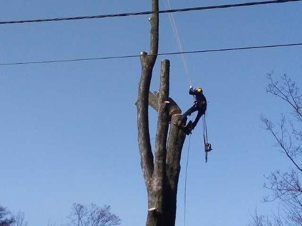 Wycinka drzew, Mulczer