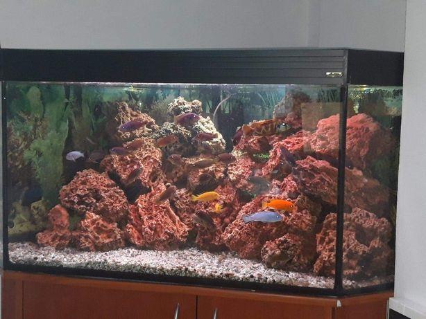 Akwarium 350 litrów gotowe do użytku