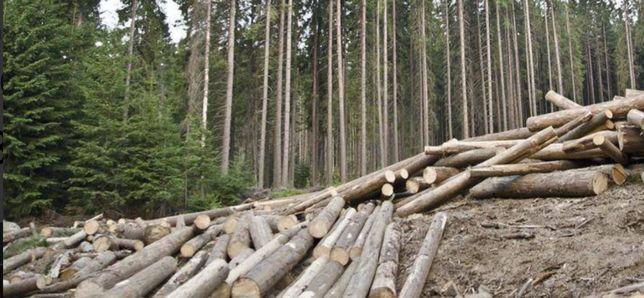 Продам дрова осика тополь