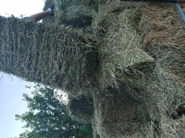 Продам луговое сено в тюках