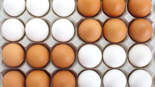 Sprzedam jajka z wlasnej hodowli