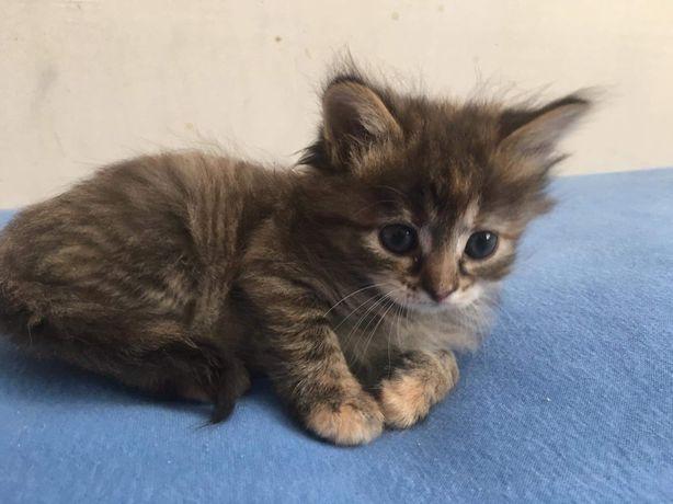 1 месяц котят даром