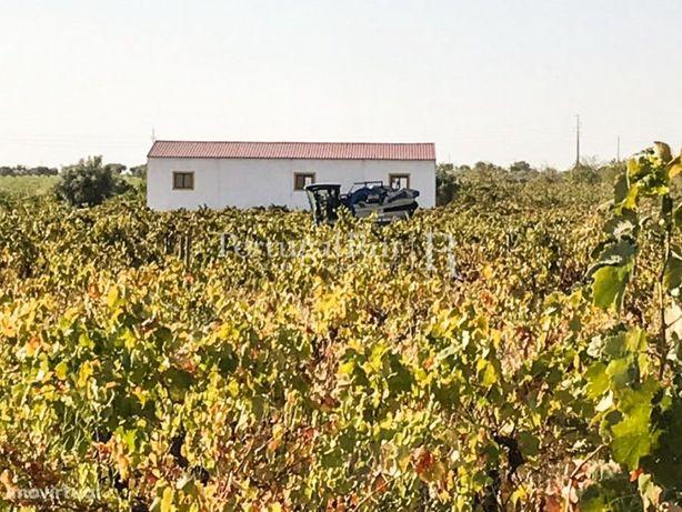 Herdade de 7,8ha com vinha e maquinaria
