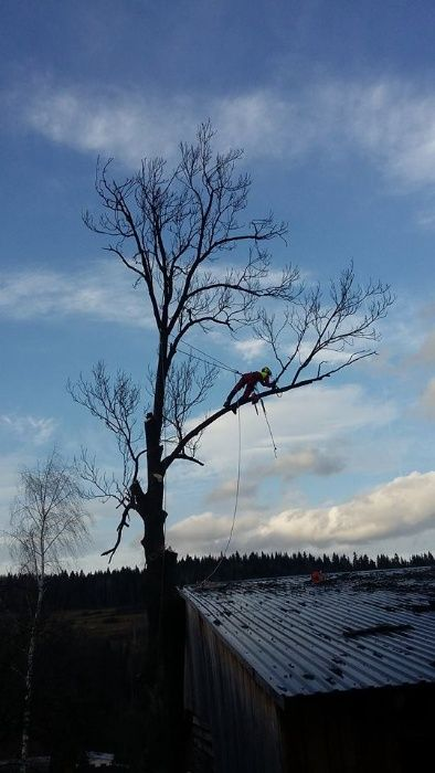 Wycinka drzew, pielęgnacja drzew, rębak, czyszczenie działek