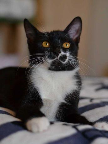 пятимісячний чорно-білий котик