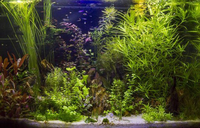 Rośliny akwariowe zestaw 20 gatunków wysyłka
