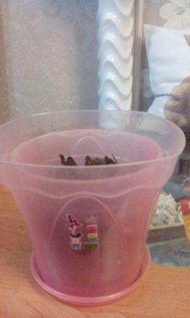 Для Орхидеи, розовая ,почти новая коробочка.