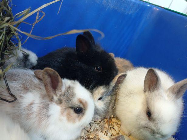 Крольчата пушистики мини кролики