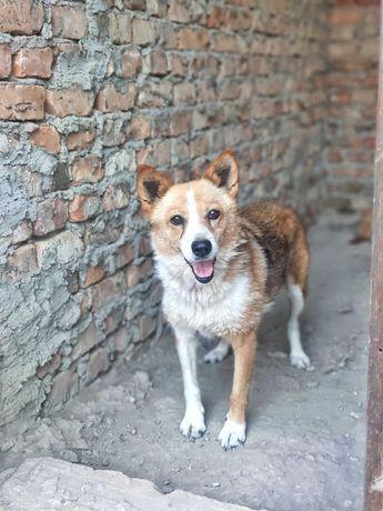 СРОЧНО! Собака ищет дом