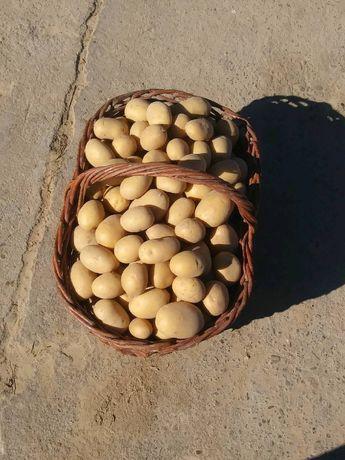 Sprzedam ziemniaki Madeira