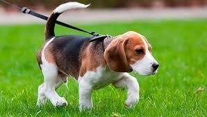 Выгул и передержка собак.