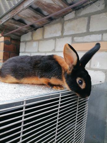 Кролики. От 250грн