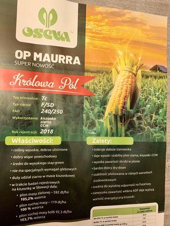 Kukurydza OP Maurra 80tyś nasion