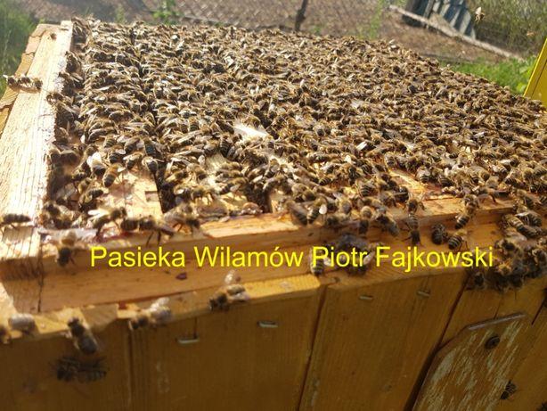 Odkłady 2021 Odkład pszczeli, wysyłamy zapisy
