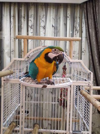 Попугай Ара,продам с клеткой
