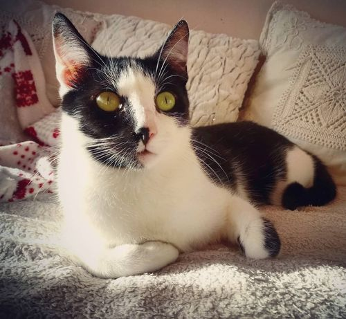 Lalo kot do adopcji