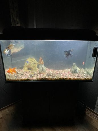 Большой аквариум 200л