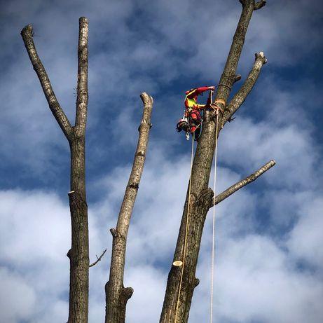 Alpinistyczna wycinka drzew, frezowanie pni, zrębkowanie