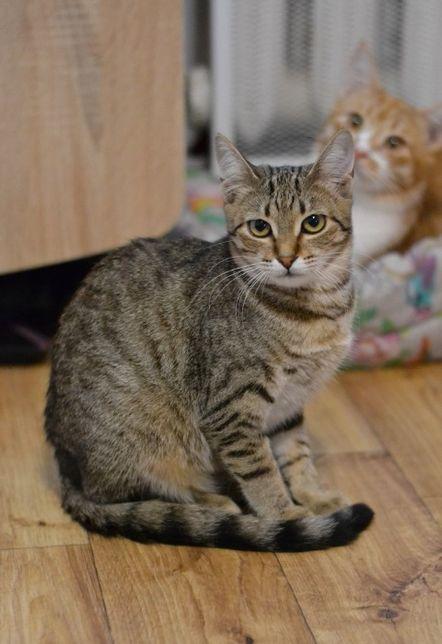 Марусічка кішка-підліток 1р