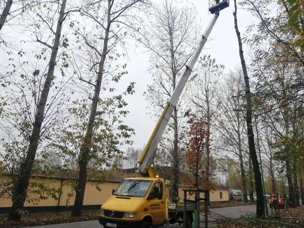 Wycinka Drzew Cały Śląsk i Okolice