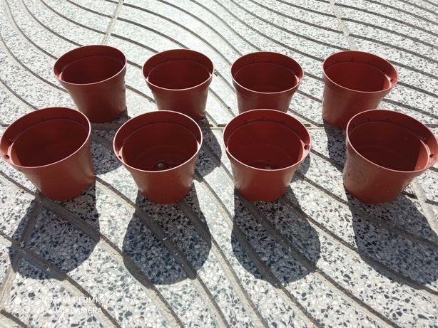 8 pequenos vasos - Catos ou suculentas?