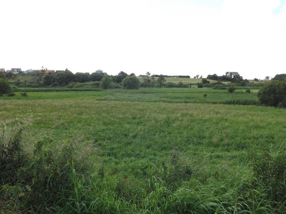 Grunty rolne, działka rolna (łąki ) Gniezno,Wełnica, razem 3,91 ha Gniezno - image 1