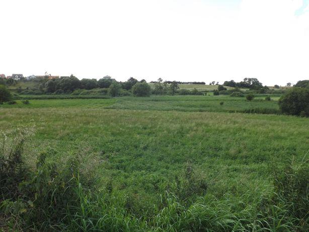 Grunty rolne, działka rolna (łąki ) Gniezno,Wełnica, razem 3,91 ha